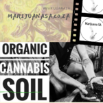 Marijuana SA