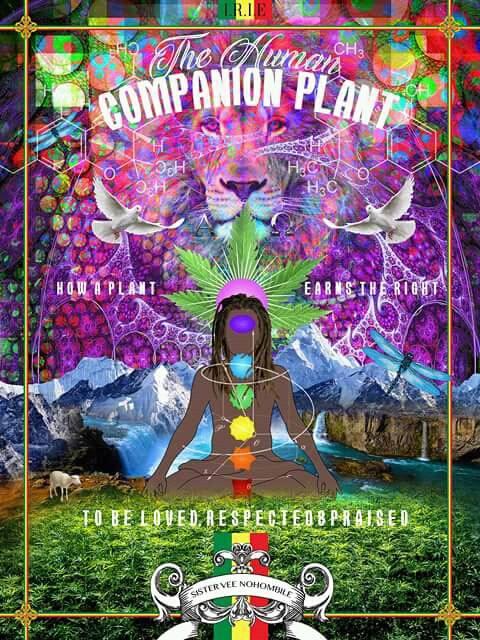 Cannabis the Companion Plant
